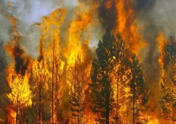В Крыму сохраняется наивысший класс пожарной опасности