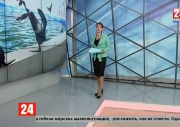 Один день из жизни крымского дельфинария: от ярких шоу до научных исследований