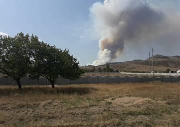 Более 40 га лесной подстилки выгорело в районе Старого Крыма