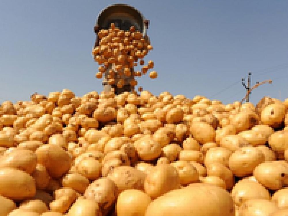 В работе ярмарки в Феодосии приняли участие 23 сельхозтоваропроизводителя