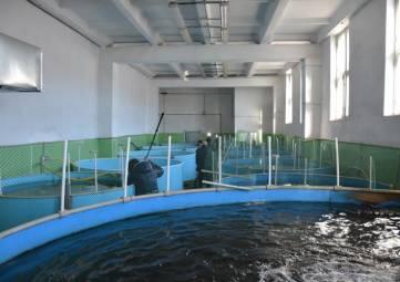 В Севастополе наращивают объемы производства аквакультуры