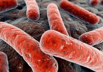 ВОЗ назвала самое смертоносное инфекционное заболевание