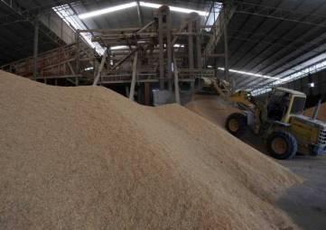 Правительство решило продать 1,5 миллиона тонн запасов зерна