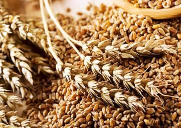 Крыму продадут 80 тонн зерна из госфонда