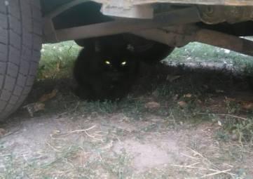 Красноперекопск.Во дворе появился новый котик.Черный, пушистый с зеленым ошейником.