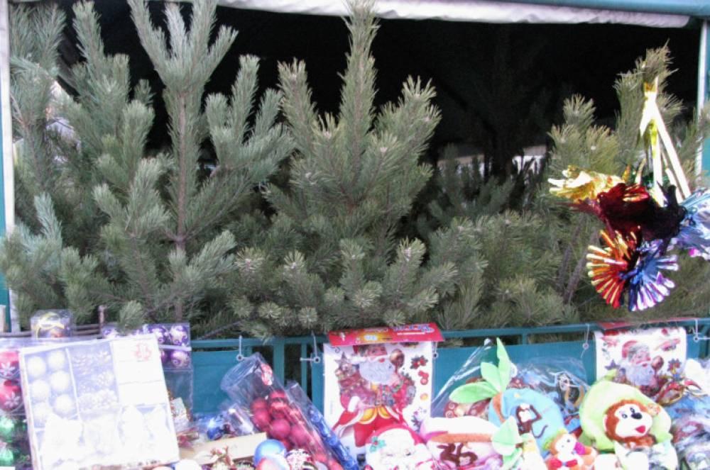 В Феодосии продают ели и сосны из Пензенской и Ростовской областей