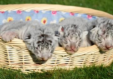 В сафари-парке в Крыму родились редкие белые