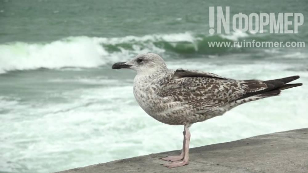 Бушующее море: величие и беспредельность (ВИДЕО)