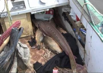Правительство России ужесточило штрафы за незаконный лов рыбы