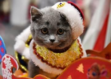 Осторожно, Новый год: как уберечь кошку от опасностей праздника