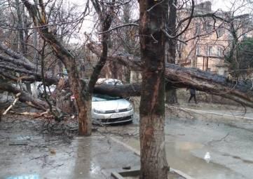 Дерево упало на машину и перегородило проезд