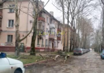 Ураган собирает урожай: в Керчи на Борзенко упало дерево
