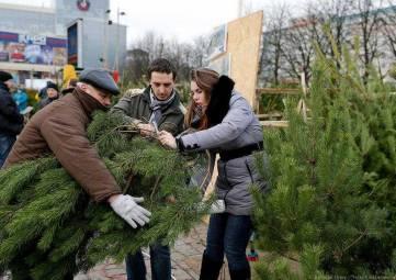 Как выбрать новогоднюю елку и сохранить ей жизнь