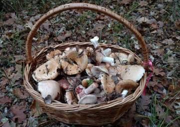 Эксперт назвал ТОП-5 крымских грибов