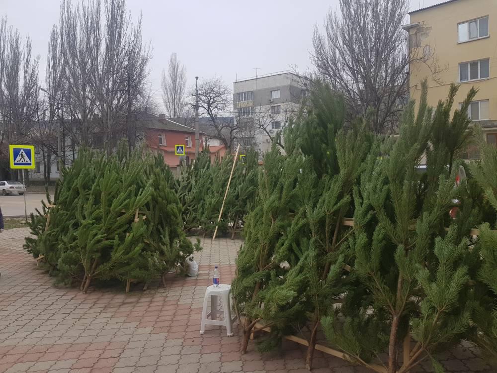 В Феодосии заработали елочные базары