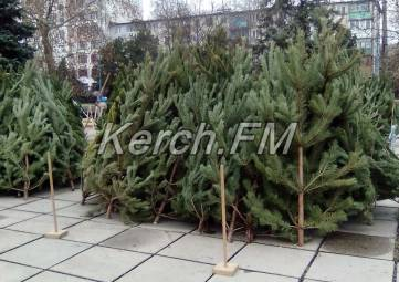 Теперь и в Аршинцево начали продавать елки