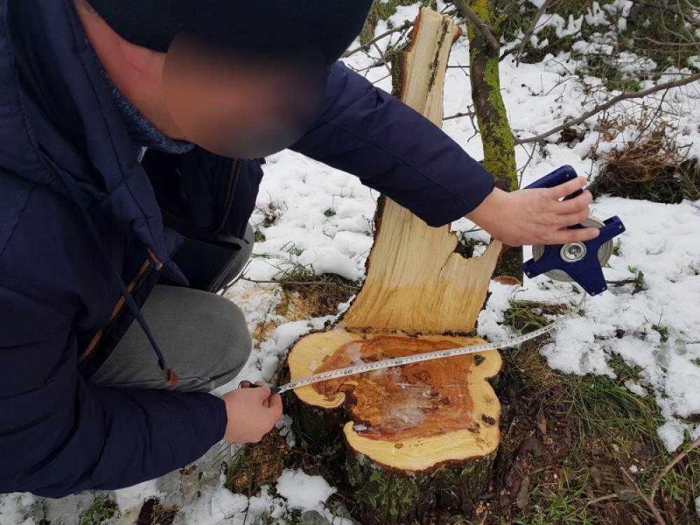 Сотрудники полиции в Первомайском районе пресекли незаконную вырубку лесных насаждений
