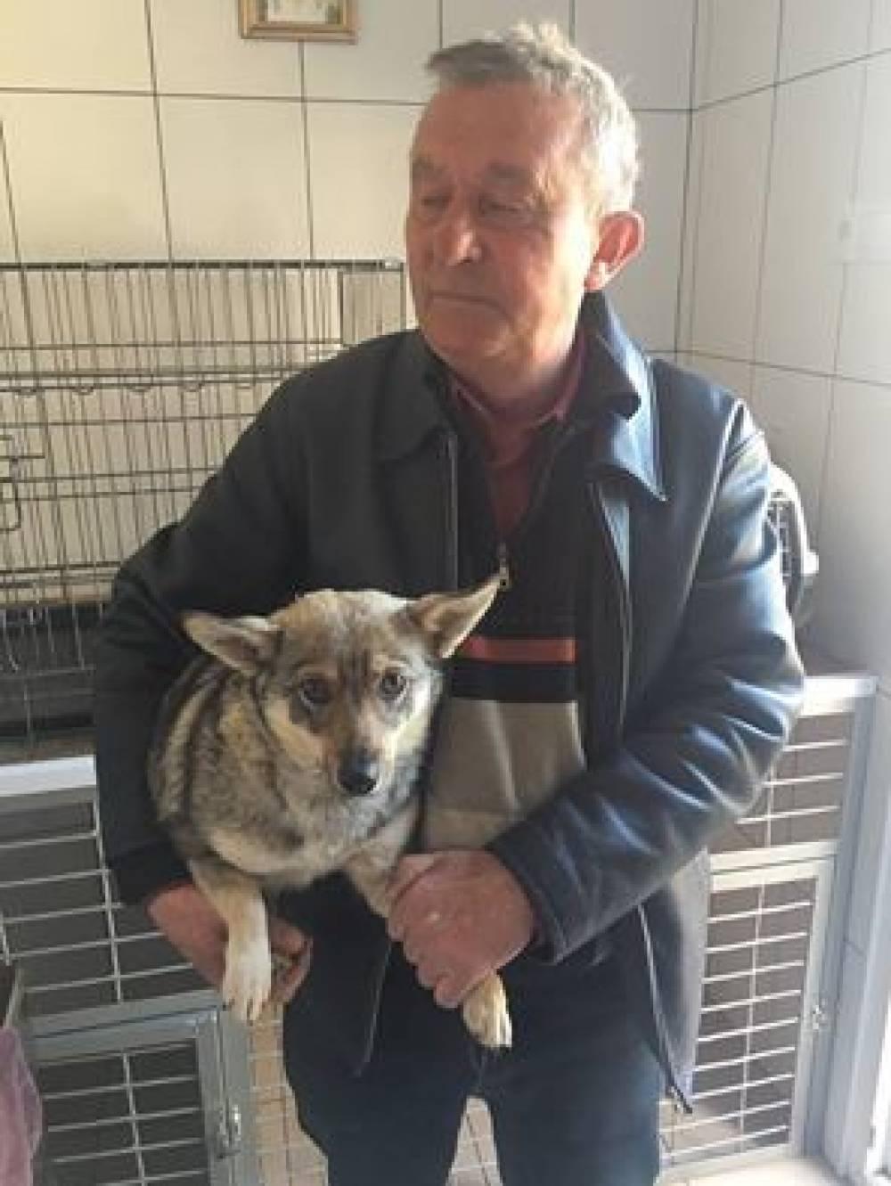 В Феодосии продолжат стерилизовать бездомных собак