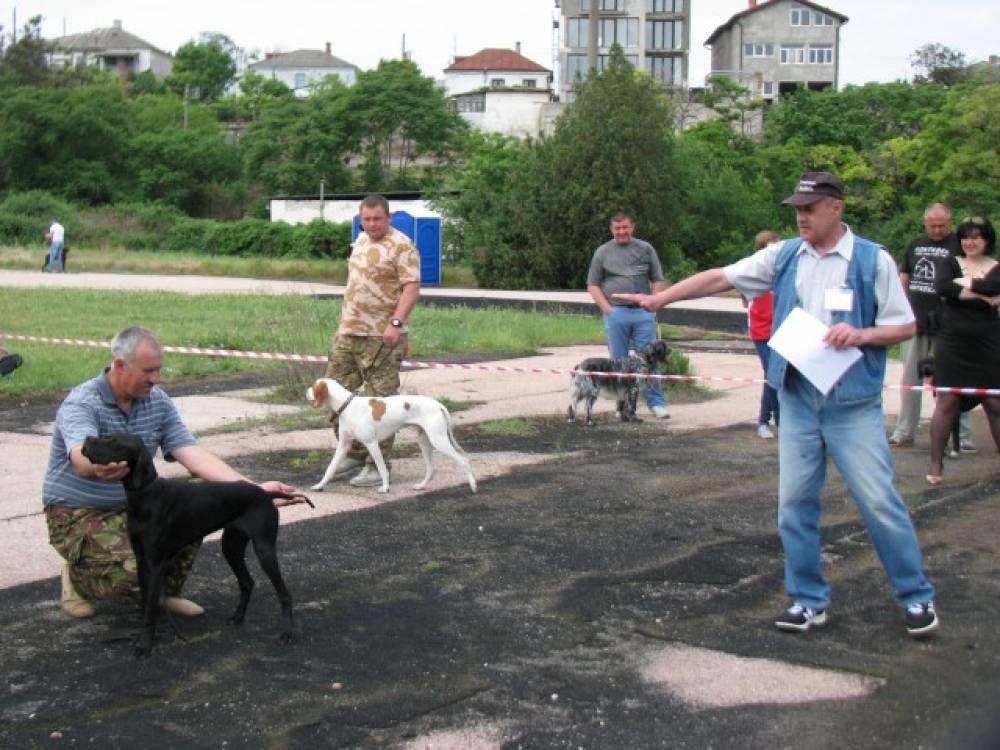 Феодосийские охотничьи собаки заняли первое место в Крыму