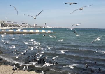 Чайки на набережной Феодосии