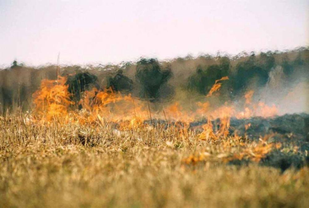 В Феодосии и, в целом, по Крыму установлен самый высокий класс пожарной опасности