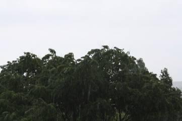 И снова летний дождик