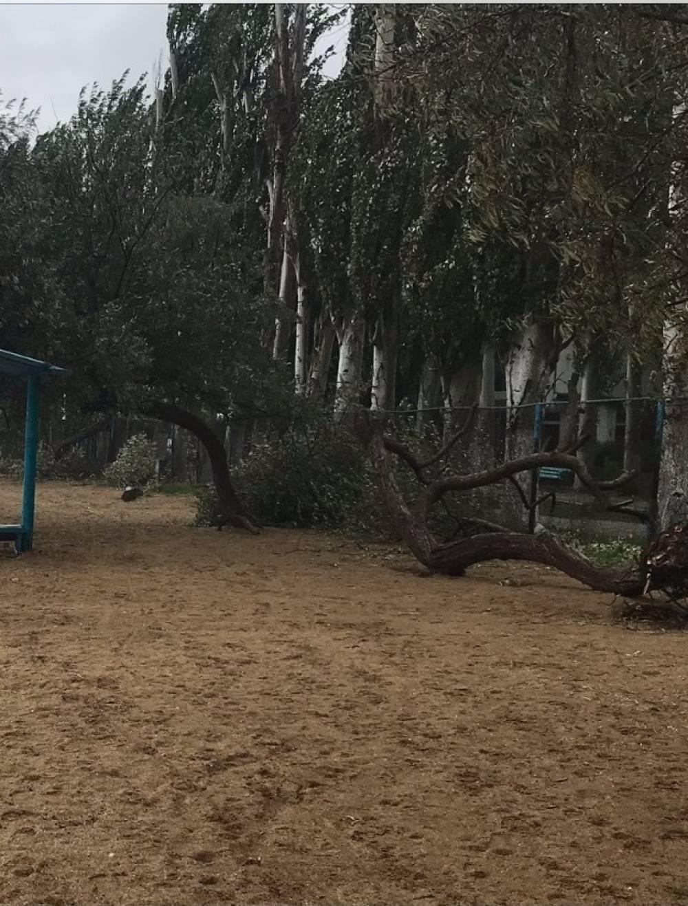 Кто позволил убрать деревья с пляжа