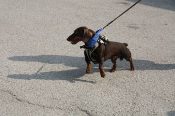 Выступления служебных собак на День города