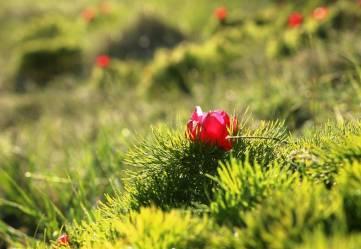 Краснокнижная красота Феодосии