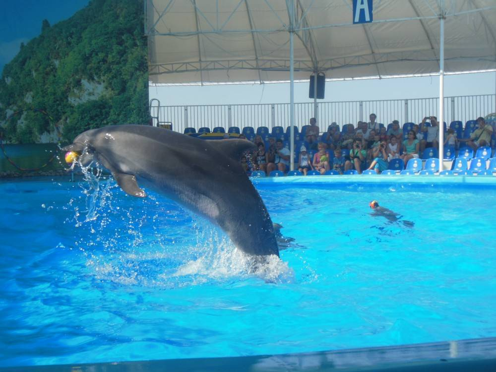 В дельфинарии