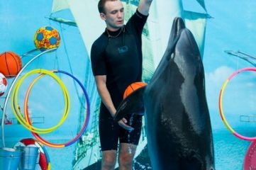 Тренер дельфинов: «У них своя аура, необычная»