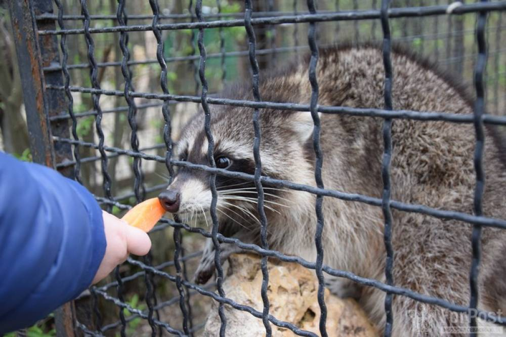 В Крыму можно погулять среди экзотических животных