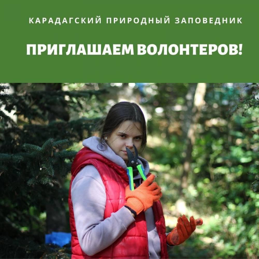 31 июля Карадагский природный заповедник приглашает волонтеров для благоустройства парковой территории, очистки от зарослей айланта, широко размножившегося по парковой территории.